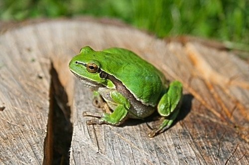 frog sitting on log